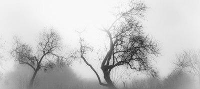 almond_trees_by_isischneider-d7zk253