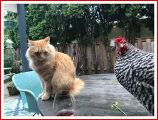 DeAnnaGossman-chicken-cat