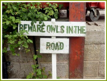owls-in-the-road